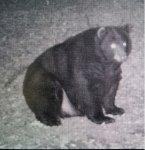 bear13.jpg