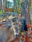 troy deer 20201.jpg